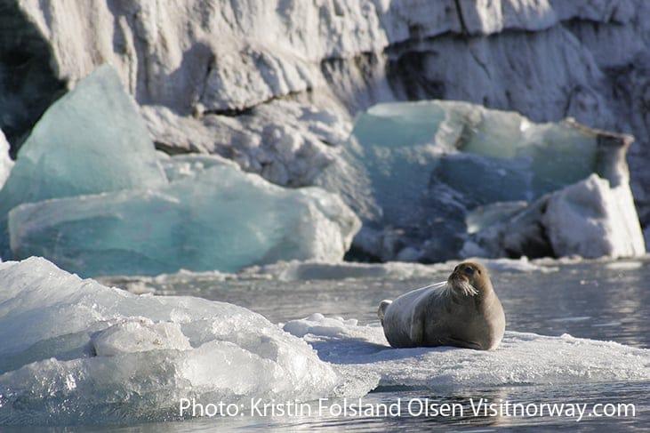 アザラシ Photo Kristin Folsland Olsen - Visitnorway.com