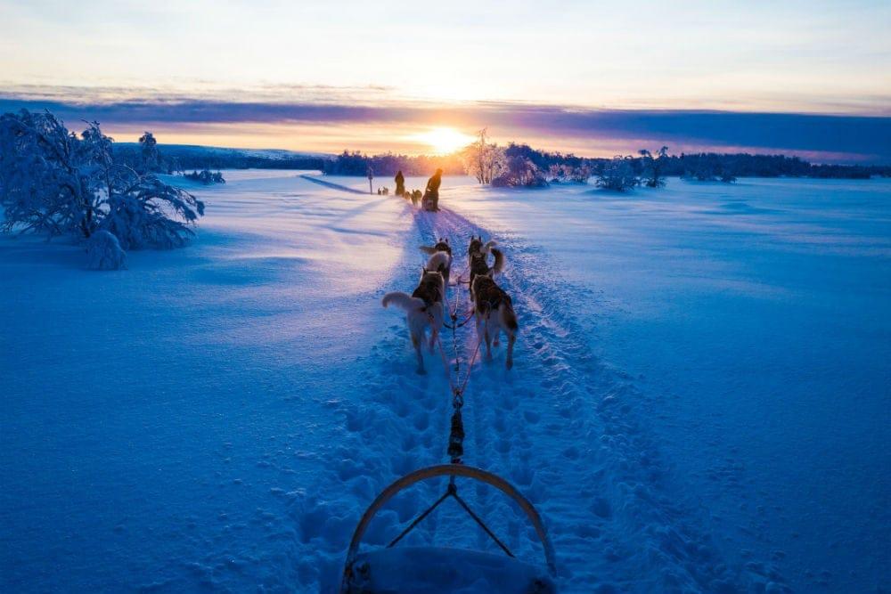 氷った湖の上を犬ぞりで走る