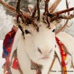 6.lola_akinmade_åkerström-white_reindeer-1605
